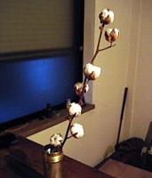 cottonball.jpg